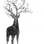 antler theatre stag drawing